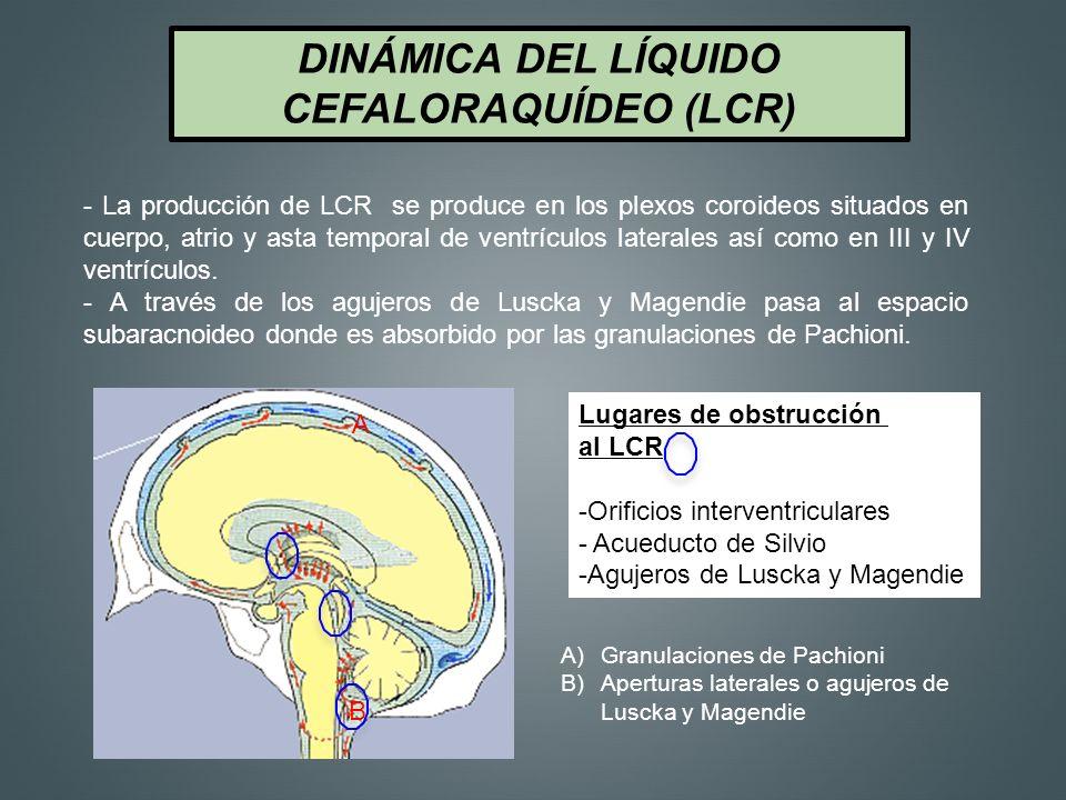 DINÁMICA DEL LÍQUIDO CEFALORAQUÍDEO (LCR)