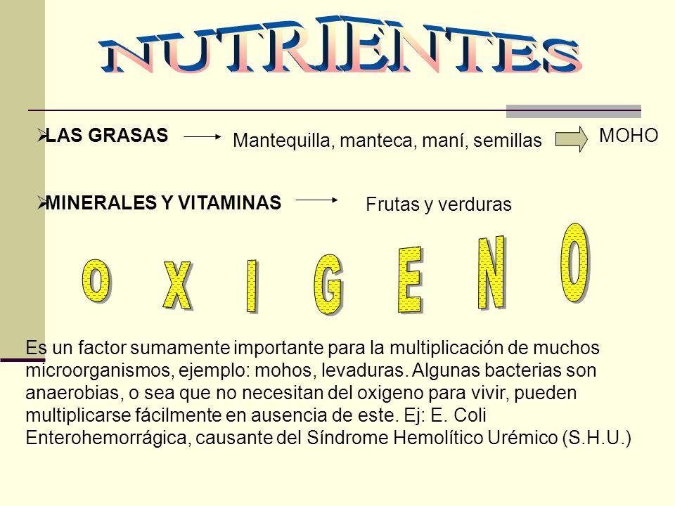 NUTRIENTES OXIGENO LAS GRASAS MINERALES Y VITAMINAS MOHO