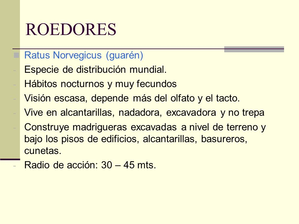 ROEDORES Ratus Norvegicus (guarén) Especie de distribución mundial.