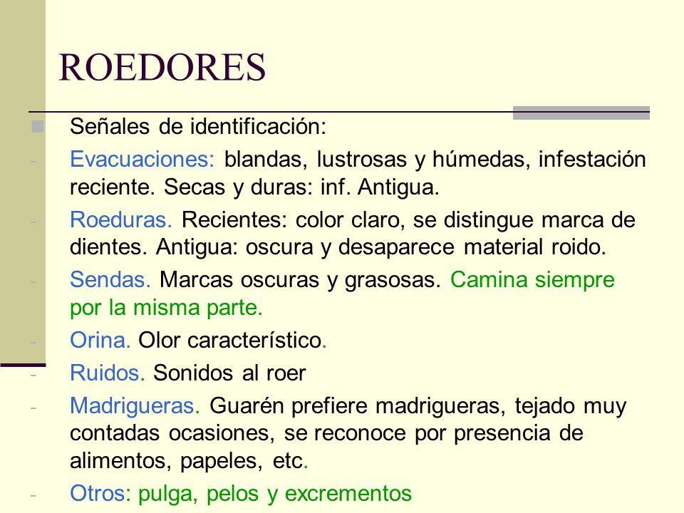 ROEDORES Señales de identificación: