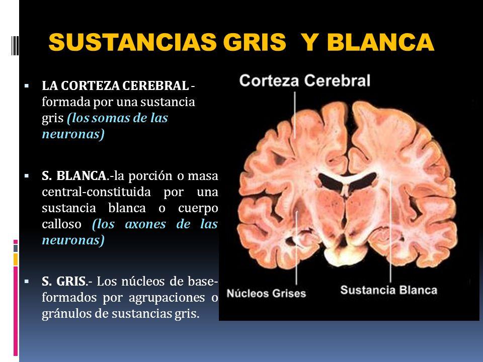 SUSTANCIAS GRIS Y BLANCA