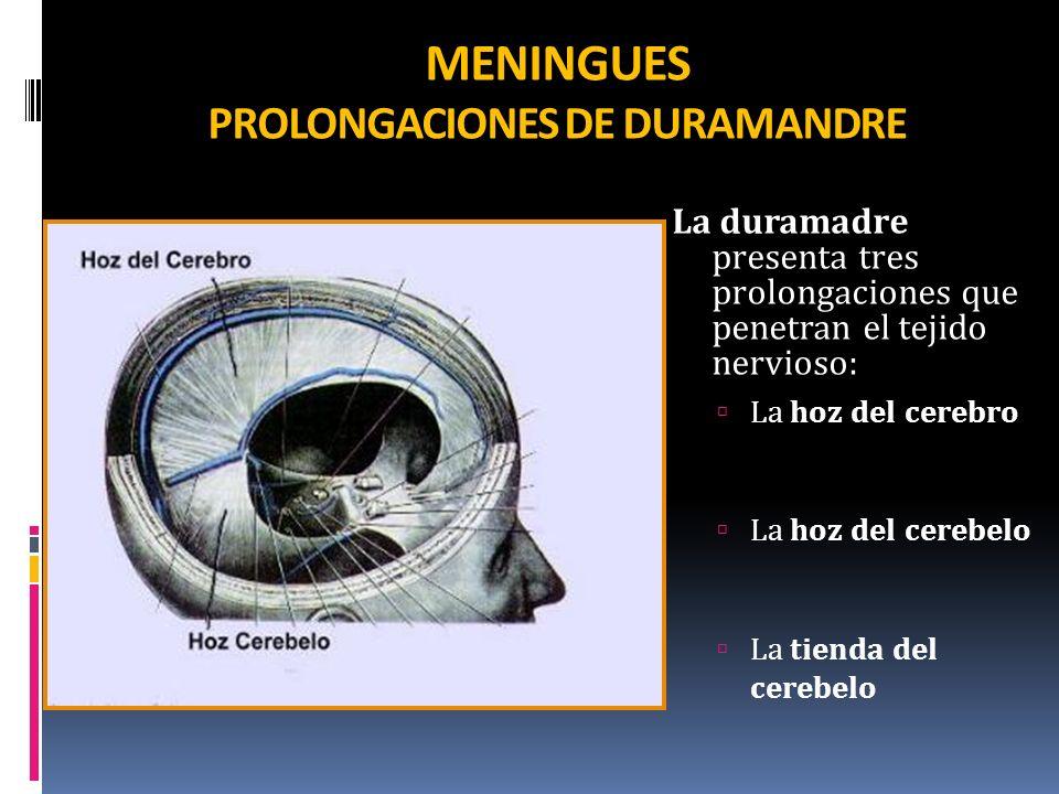 MENINGUES PROLONGACIONES DE DURAMANDRE