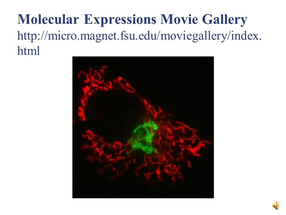 Molecular Expressions Movie Gallery http://micro. magnet. fsu