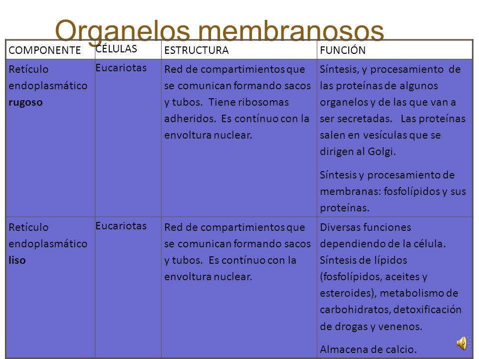 Organelos membranosos