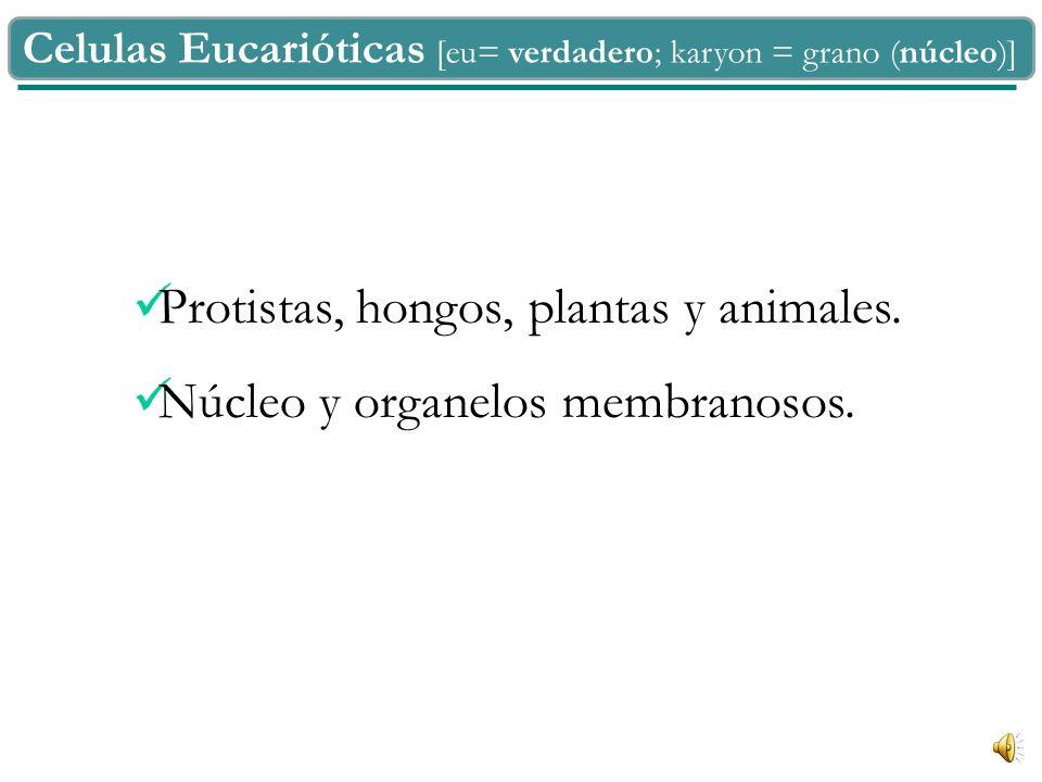 Protistas, hongos, plantas y animales. Núcleo y organelos membranosos.