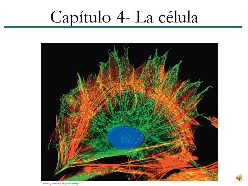 Capítulo 4- La célula 1