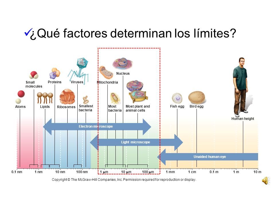 ¿Qué factores determinan los límites
