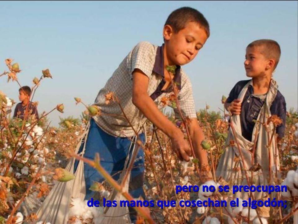 pero no se preocupan de las manos que cosechan el algodón;