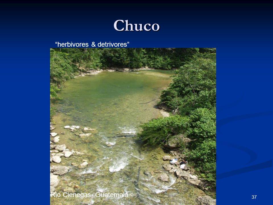 Chuco herbivores & detrivores Rio Cienegas, Guatemala