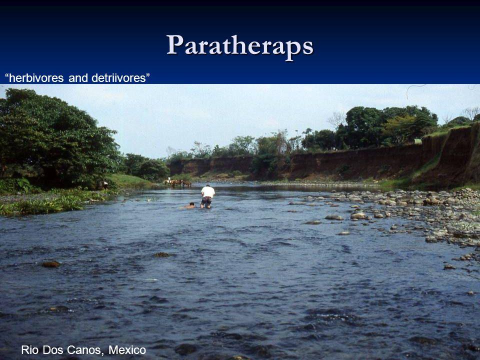 Paratheraps herbivores and detriivores Rio Dos Canos, Mexico