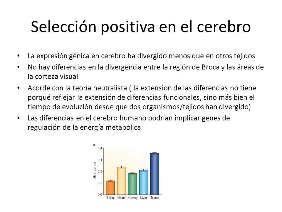 Selección positiva en el cerebro