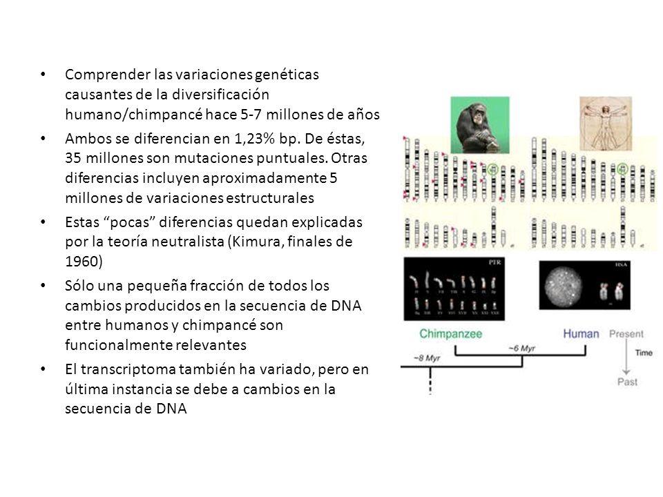 Comprender las variaciones genéticas causantes de la diversificación humano/chimpancé hace 5-7 millones de años