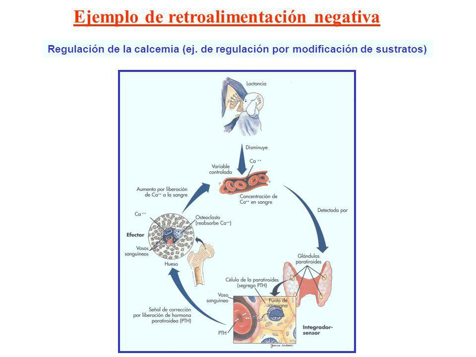 Retroalimentación Negativa Ejemplos. Introducción a la fisiología ...