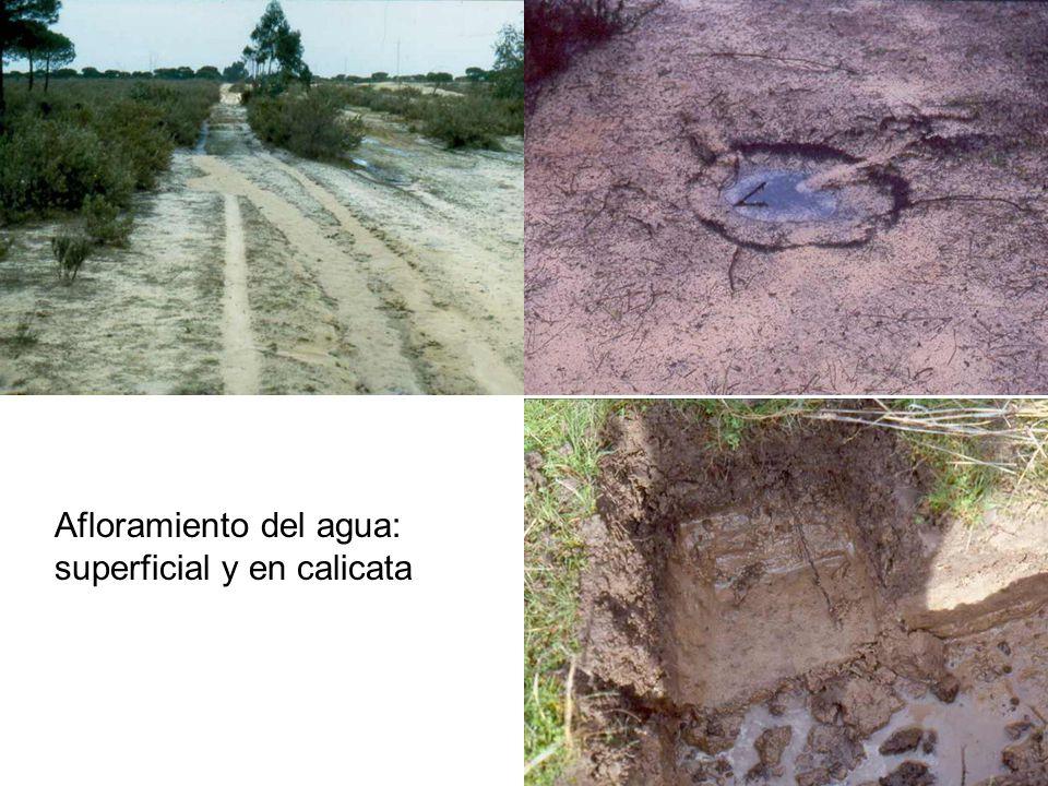 Afloramiento del agua: superficial y en calicata