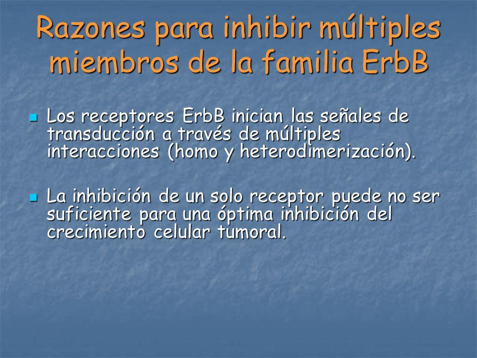 Razones para inhibir múltiples miembros de la familia ErbB