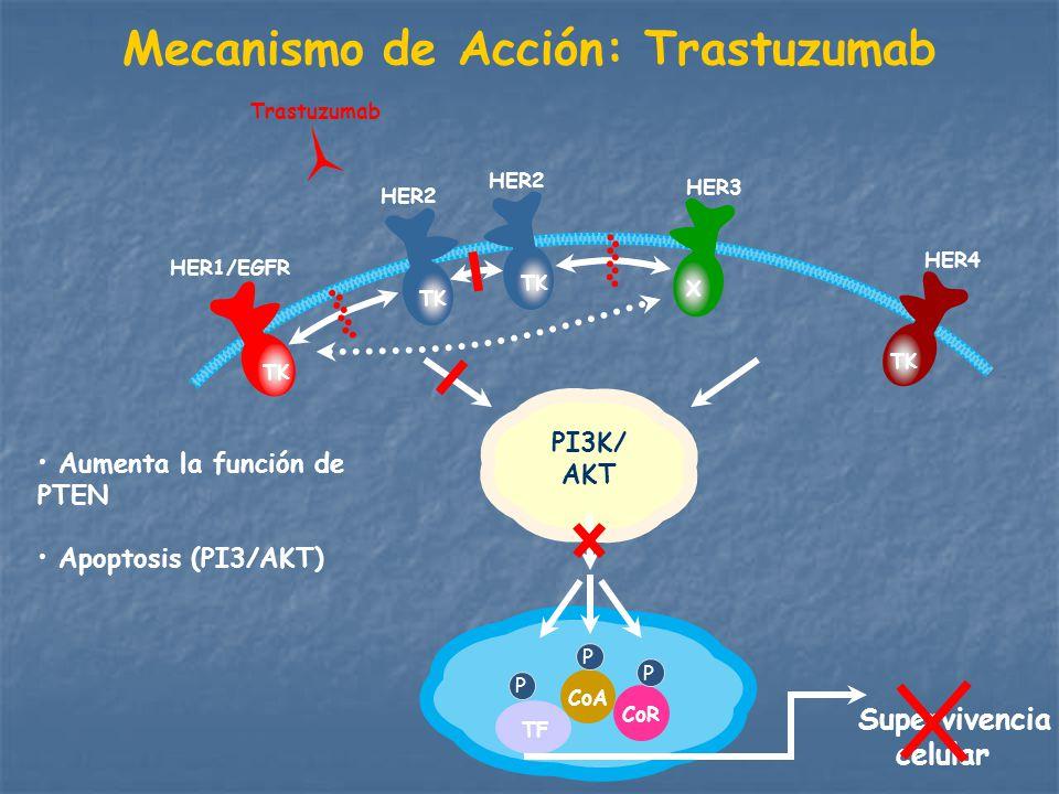Mecanismo de Acción: Trastuzumab