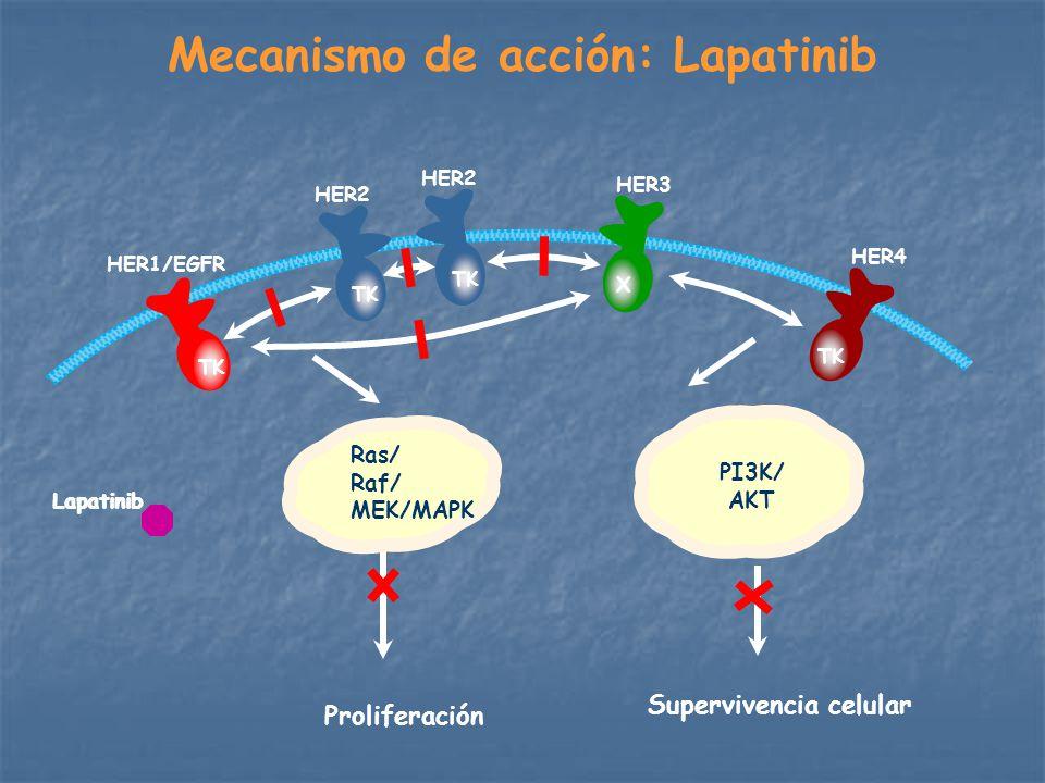 Mecanismo de acción: Lapatinib