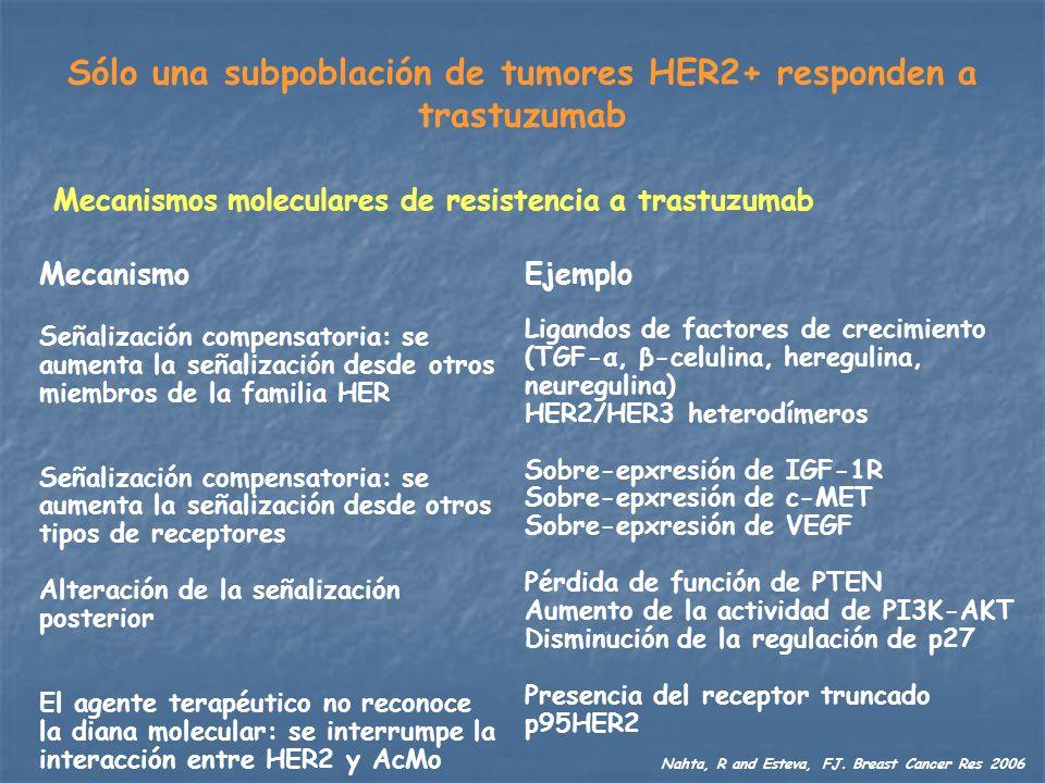 Sólo una subpoblación de tumores HER2+ responden a trastuzumab