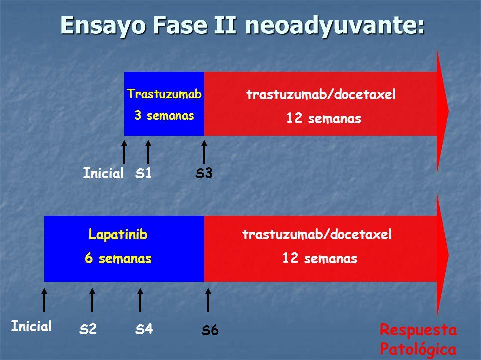 Ensayo Fase II neoadyuvante:
