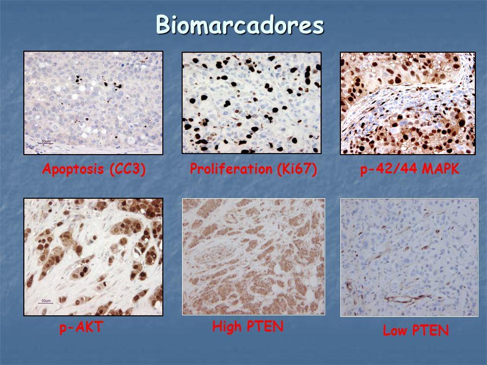 Biomarcadores Apoptosis (CC3) Proliferation (Ki67) p-42/44 MAPK