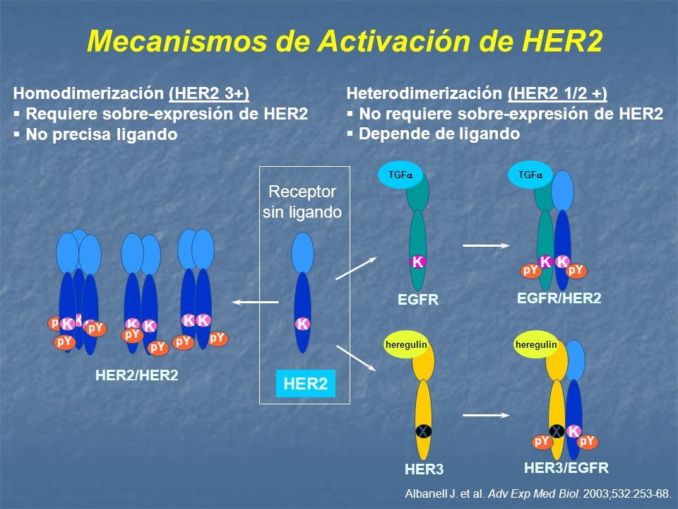 Mecanismos de Activación de HER2