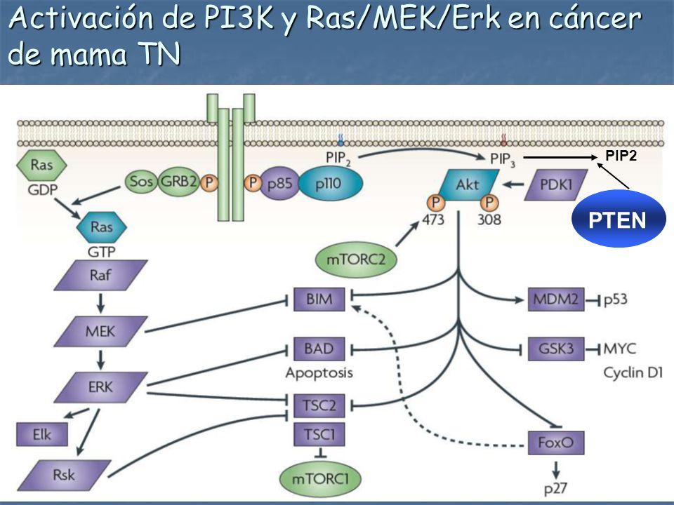 Activación de PI3K y Ras/MEK/Erk en cáncer de mama TN