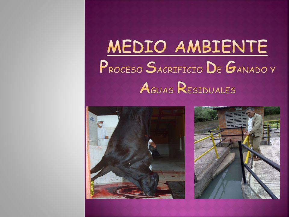 MEDIO AMBIENTE PROCESO SACRIFICIO DE GANADO Y AGUAS RESIDUALES