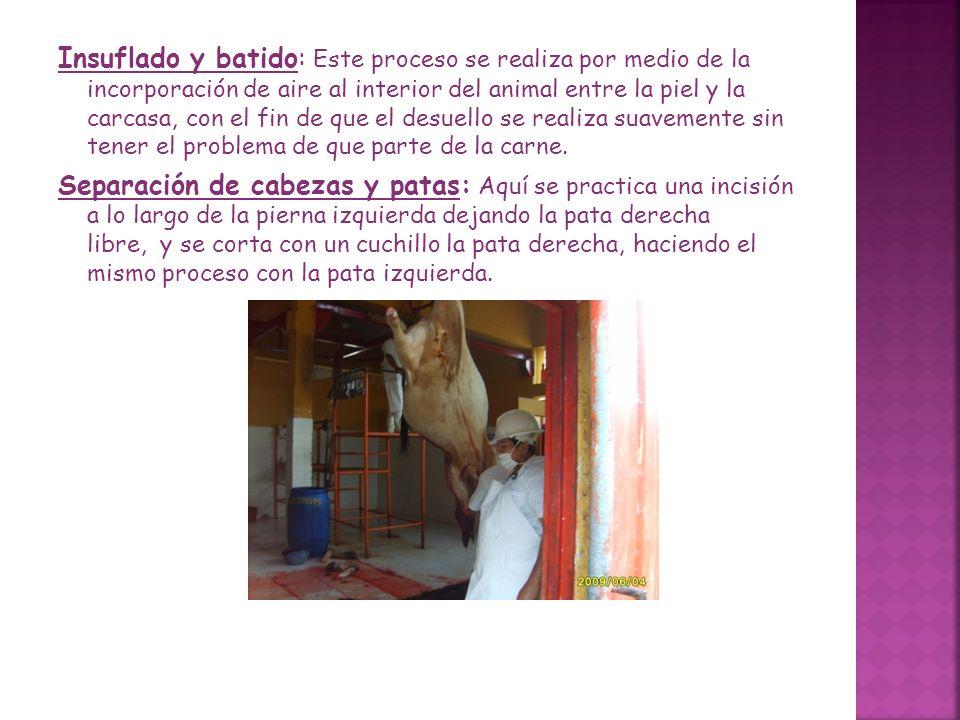 Insuflado y batido: Este proceso se realiza por medio de la incorporación de aire al interior del animal entre la piel y la carcasa, con el fin de que el desuello se realiza suavemente sin tener el problema de que parte de la carne.