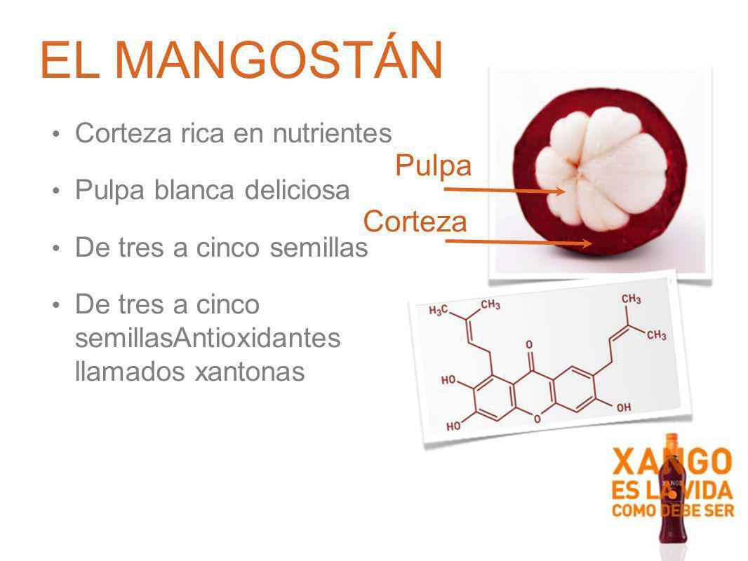 EL MANGOSTÁN Pulpa Corteza Corteza rica en nutrientes