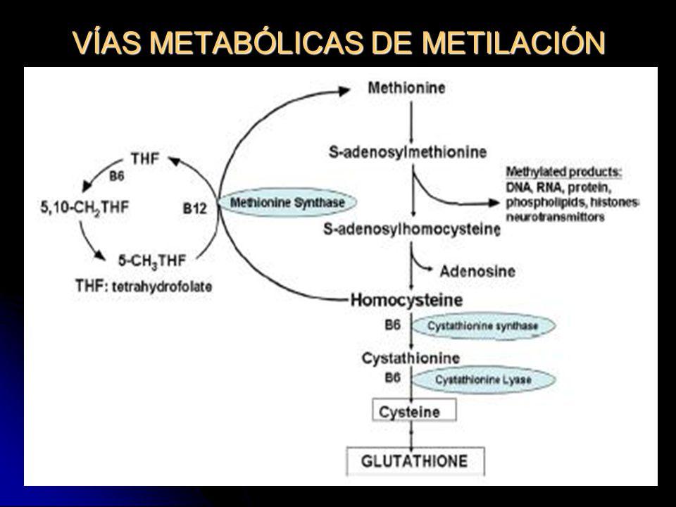 VÍAS METABÓLICAS DE METILACIÓN