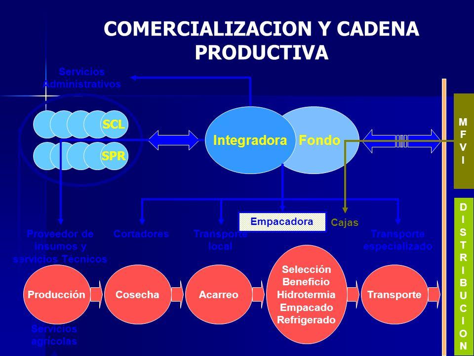 COMERCIALIZACION Y CADENA PRODUCTIVA