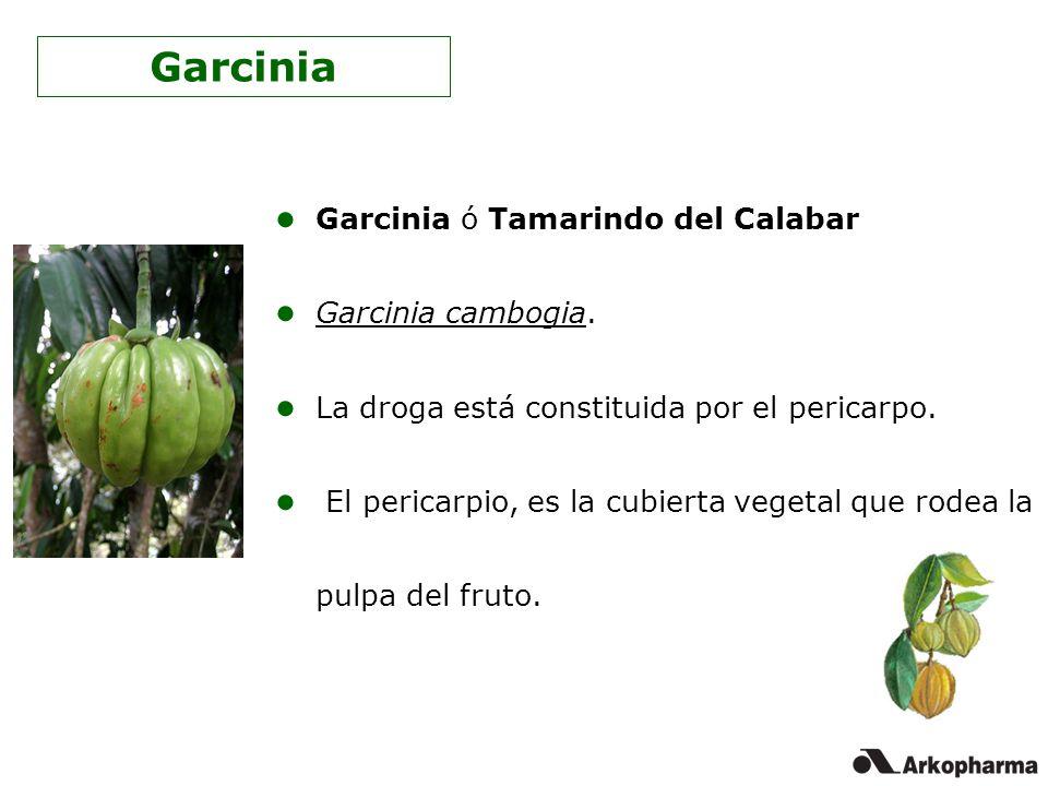 Garcinia Garcinia ó Tamarindo del Calabar Garcinia cambogia.