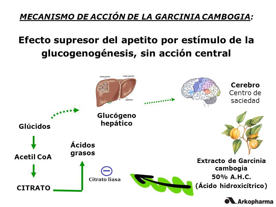 MECANISMO DE ACCIÓN DE LA GARCINIA CAMBOGIA: