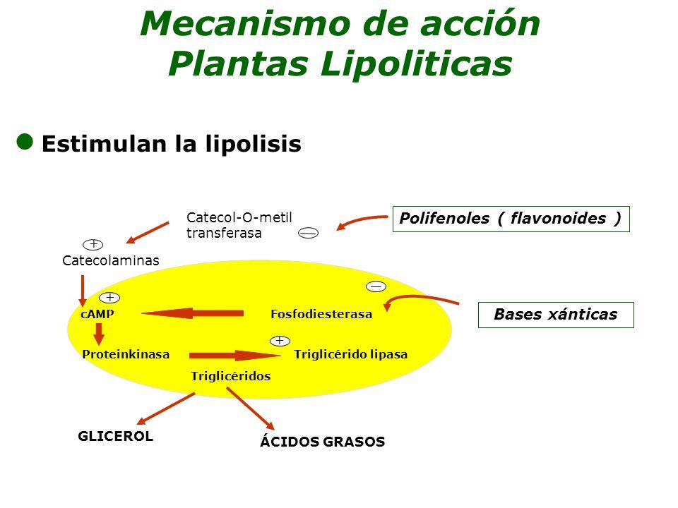 Estimulan la lipolisis