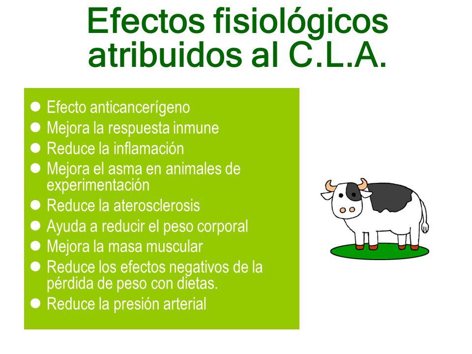 Efectos fisiológicos atribuidos al C.L.A.