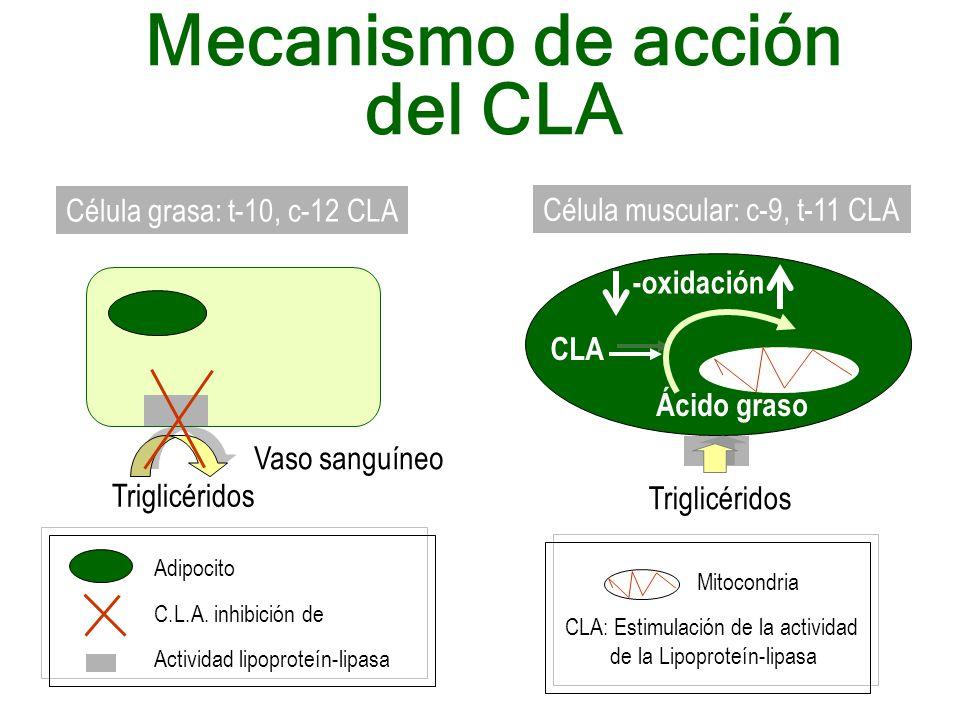 Mecanismo de acción del CLA