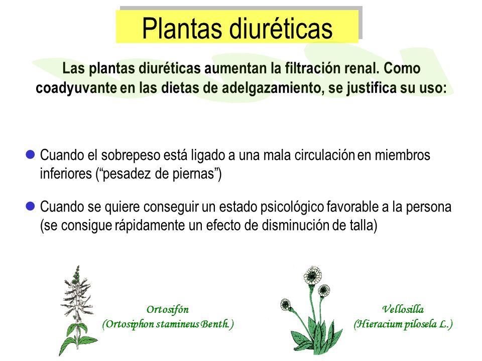 (Ortosiphon stamineus Benth.) (Hieracium pilosela L.)