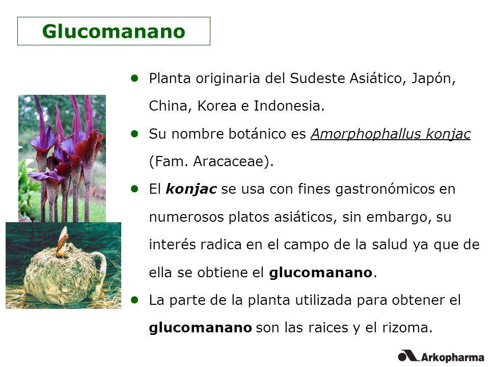 Glucomanano Planta originaria del Sudeste Asiático, Japón, China, Korea e Indonesia. Su nombre botánico es Amorphophallus konjac (Fam. Aracaceae).