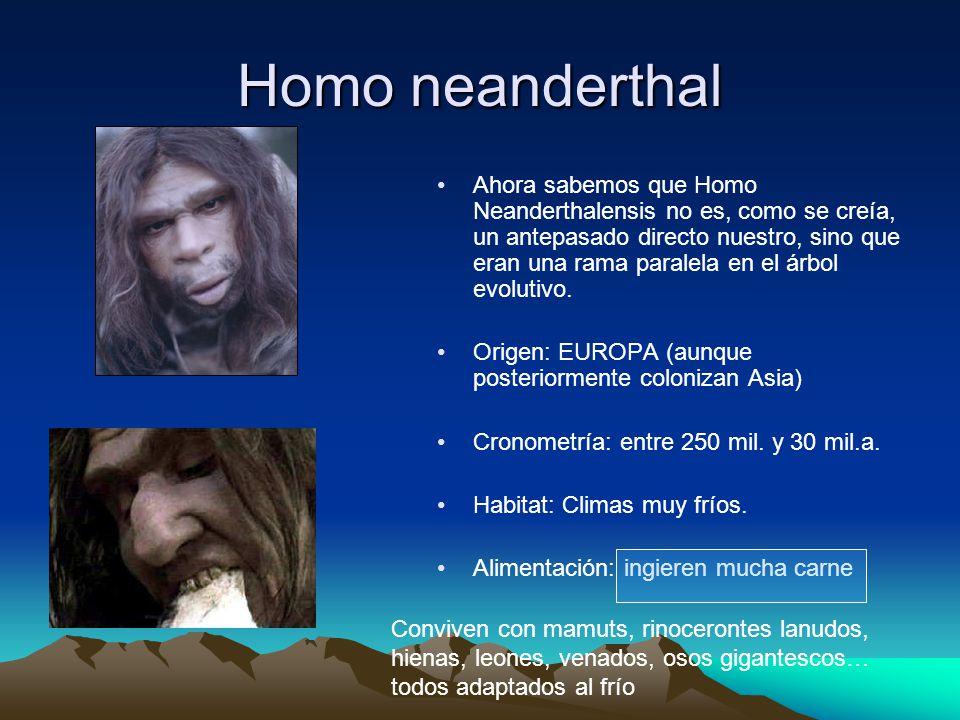 Q Significa Neanderthal Homo neanderthalensis ...