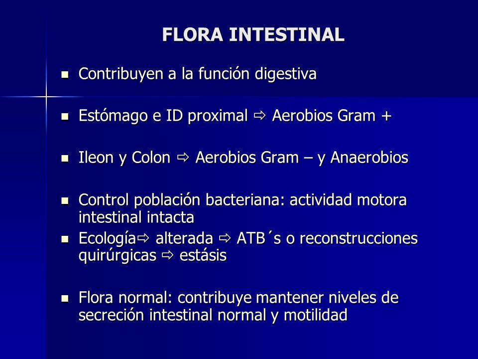 FLORA INTESTINAL Contribuyen a la función digestiva