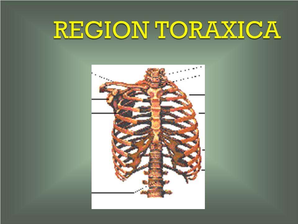 REGION TORAXICA