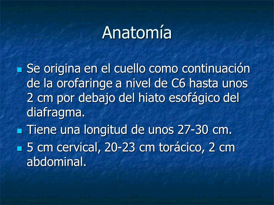 AnatomíaSe origina en el cuello como continuación de la orofaringe a nivel de C6 hasta unos 2 cm por debajo del hiato esofágico del diafragma.
