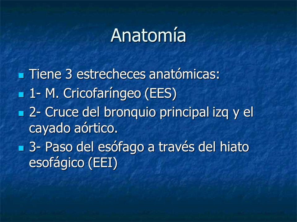 Anatomía Tiene 3 estrecheces anatómicas: 1- M. Cricofaríngeo (EES)