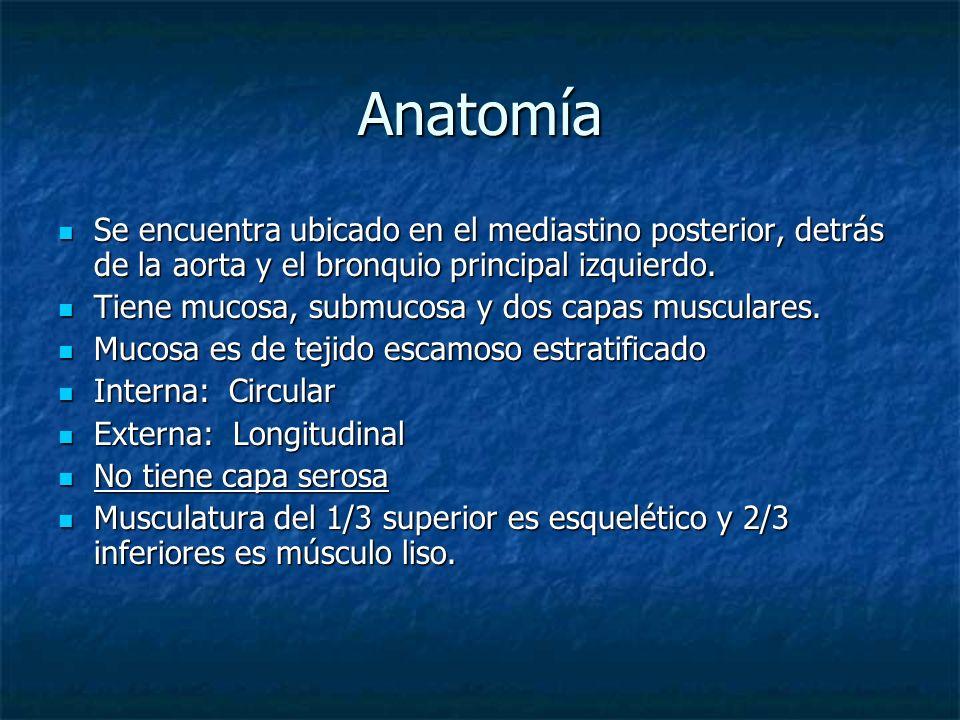 AnatomíaSe encuentra ubicado en el mediastino posterior, detrás de la aorta y el bronquio principal izquierdo.