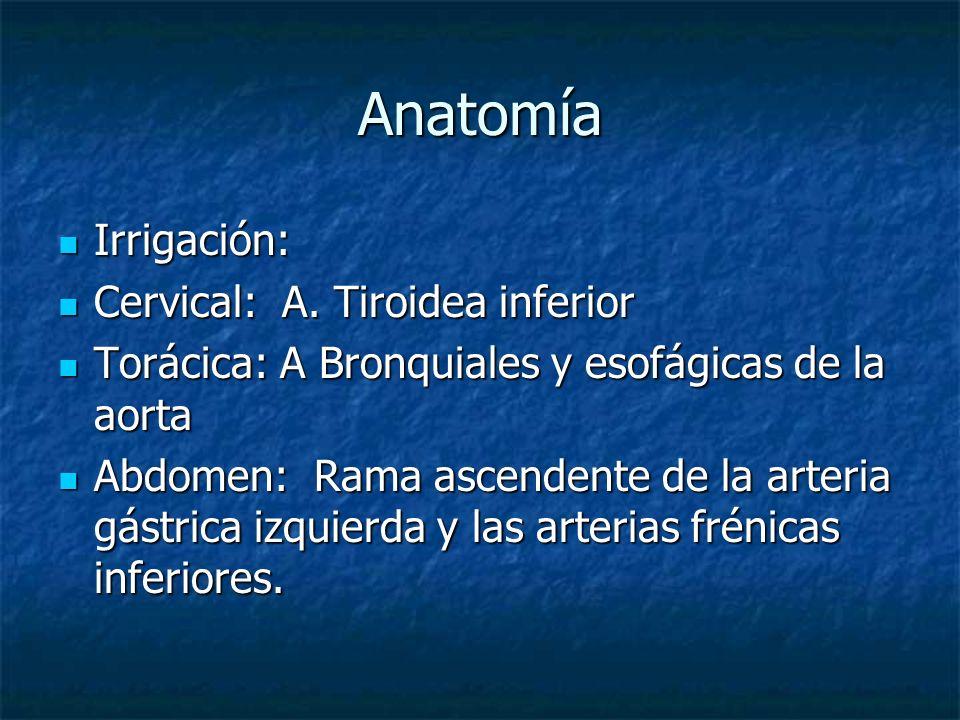 Anatomía Irrigación: Cervical: A. Tiroidea inferior