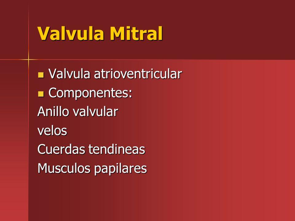 Valvula Mitral Valvula atrioventricular Componentes: Anillo valvular