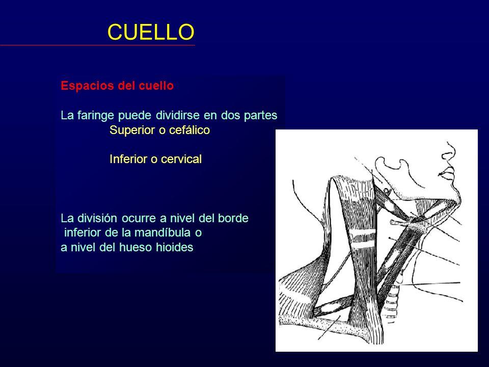CUELLO Espacios del cuello La faringe puede dividirse en dos partes