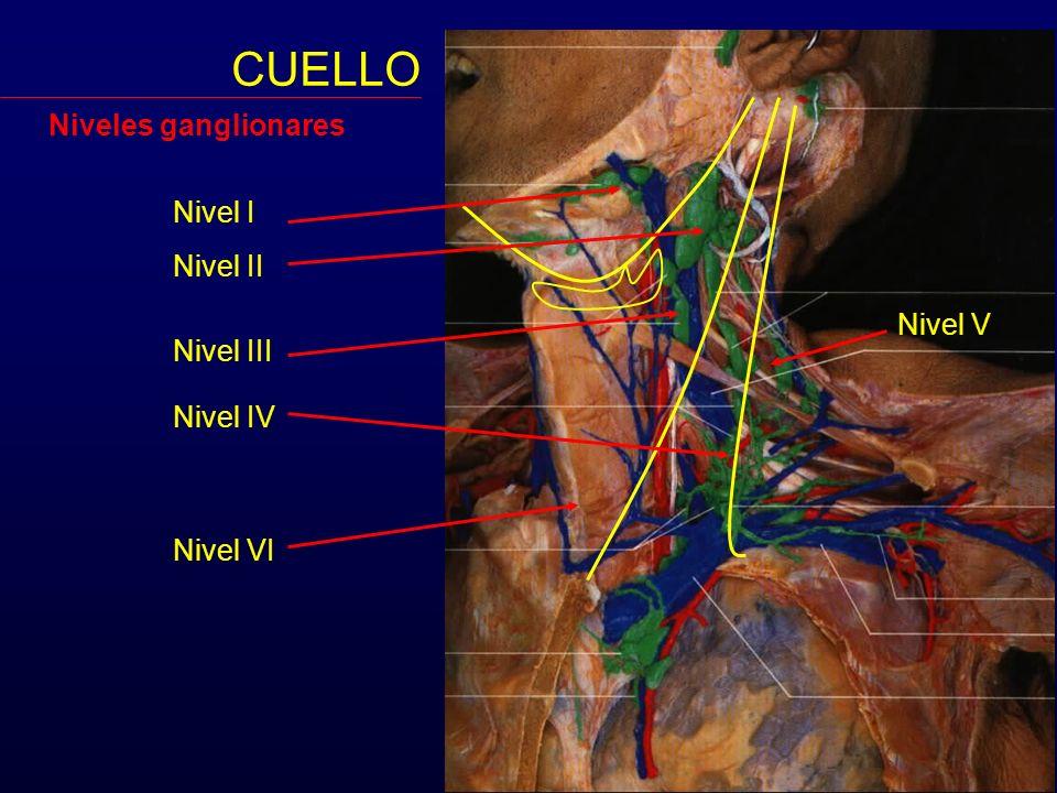 CUELLO Niveles ganglionares Nivel I Nivel II Nivel V Nivel III