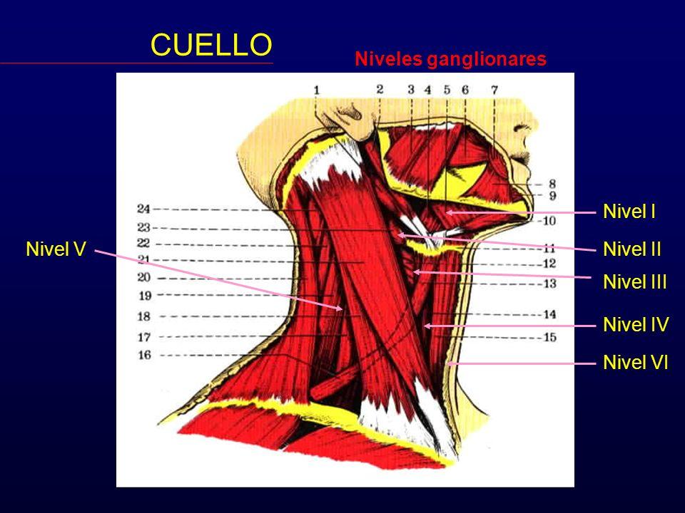 CUELLO Niveles ganglionares Nivel I Nivel V Nivel II Nivel III