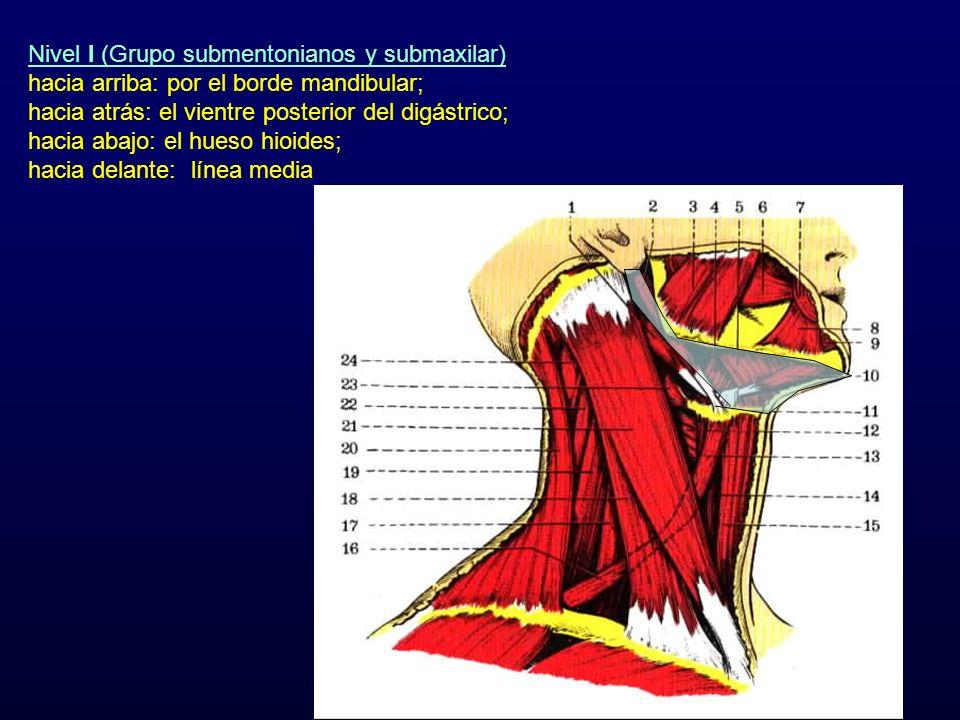 Nivel I (Grupo submentonianos y submaxilar)